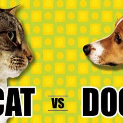 Cats vs Dogs: Which Pet is For You
