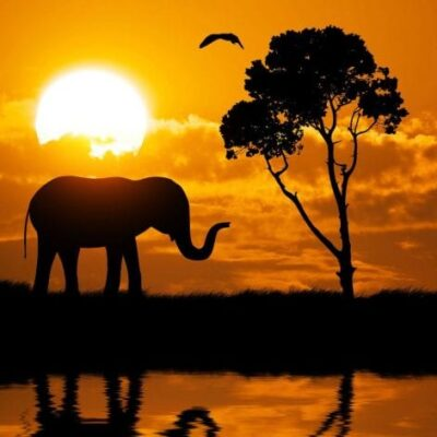 Five Reasons To Consider A Safari Honeymoon