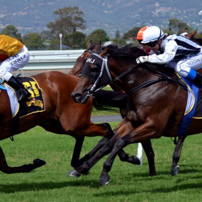How To Make The Most Out Of Your Horse Racing Bet